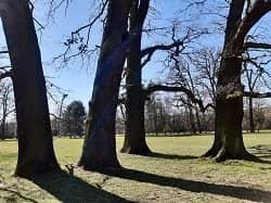 Eiche - Massivholz-Dielen und Parkett